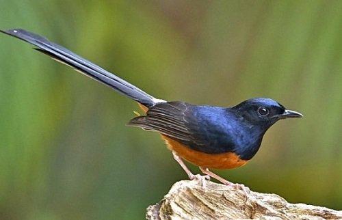 Em hãy tả một con chim mà em thích nhất