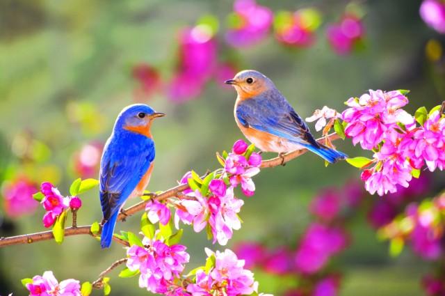 """Cảm nhận về bài thơ """"Mùa xuân nho nhỏ"""" của Thanh Hải"""